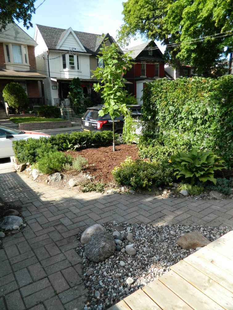Garden cleanup after Leslieville front yard after Paul Jung Gardening Services Toronto