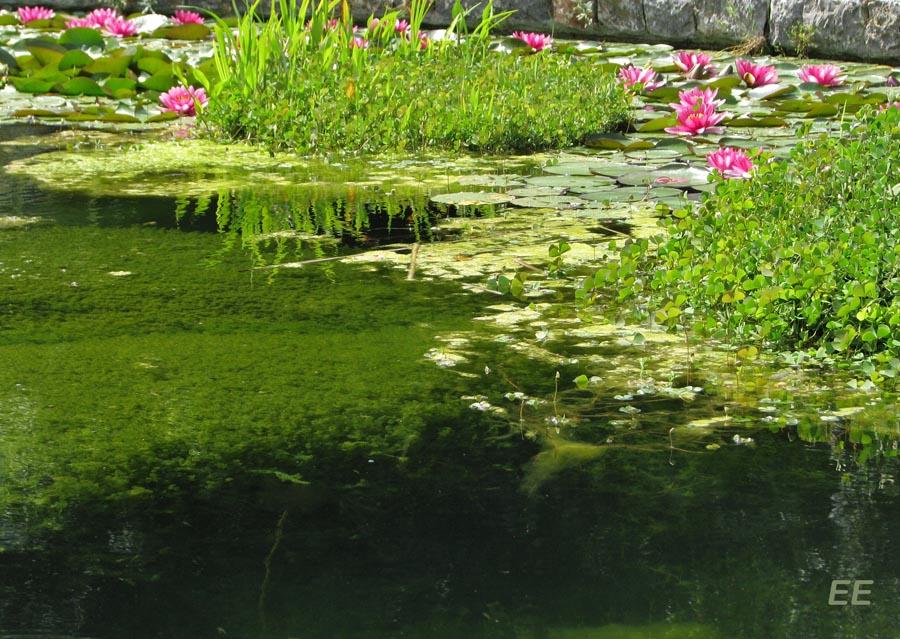 Mallorca es as tambi n jard n bot nico soll r for Jardin botanico soller