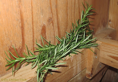 I put fresh stalks of rosemary inside my chicken coop during the growing season.