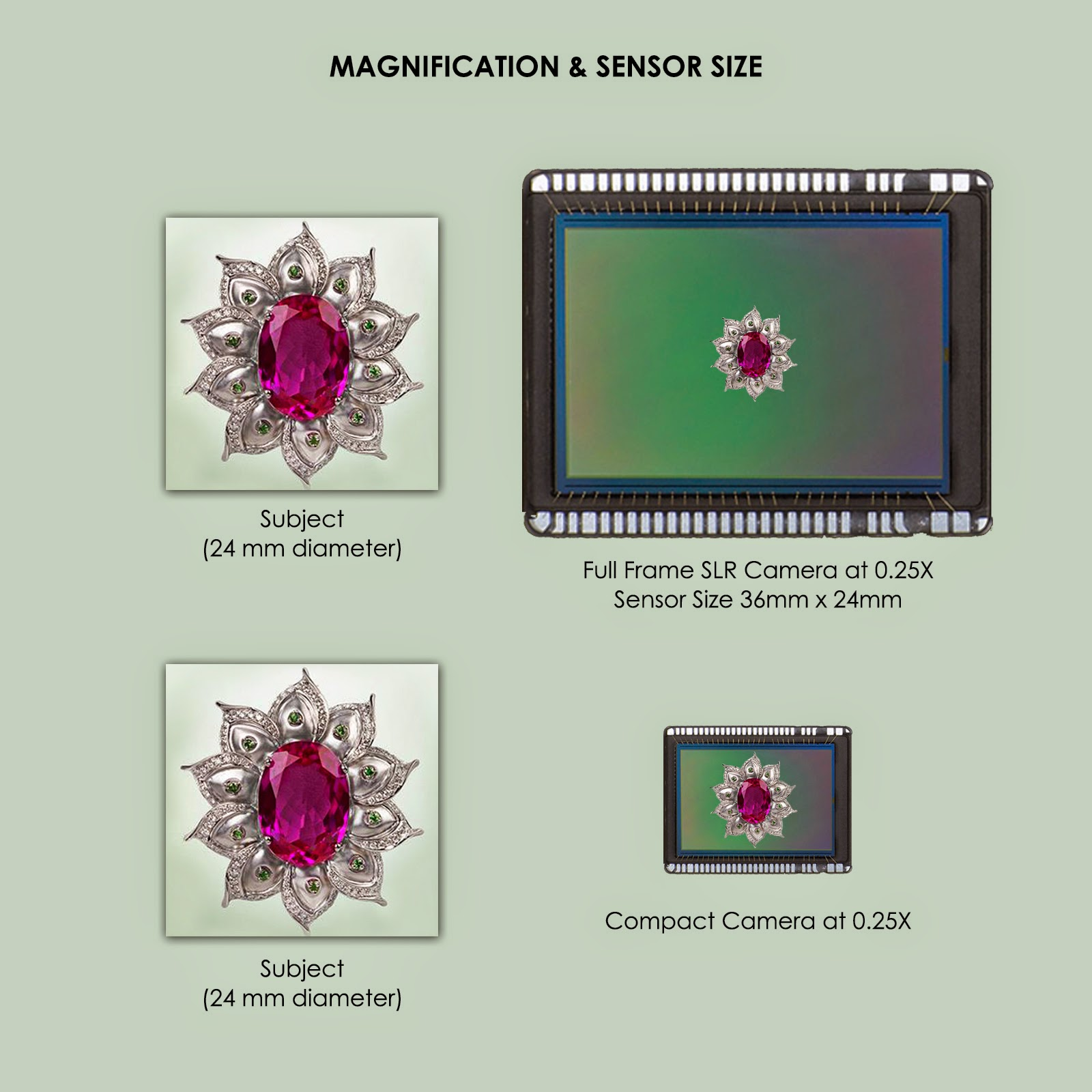 macro photography magnification and sensor size