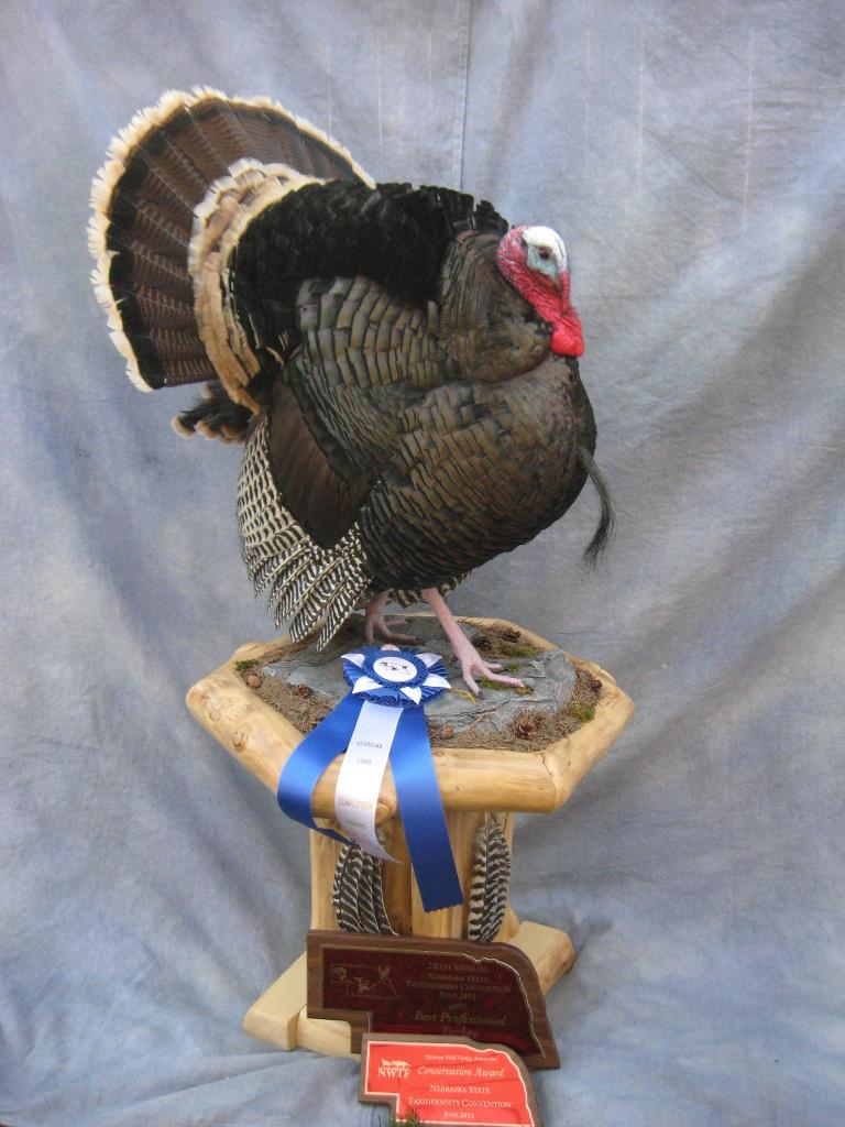 taxidermy mounts bird award turkey mount competition winning taxidermist winner duck merriam dakota national state champion south merriams championship showpiecetaxidermy