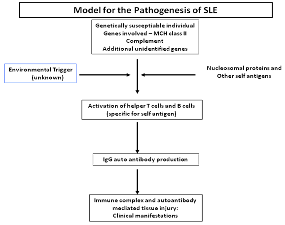 pathophysiology of systemic lupus erythematosus Read our article and learn more on medlineplus: systemic lupus erythematosus.