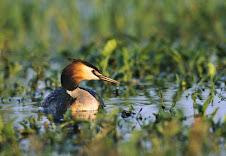 Fauna Bacia Taquari-Antas- Fonte: Aepan-ONG - Série: Aves