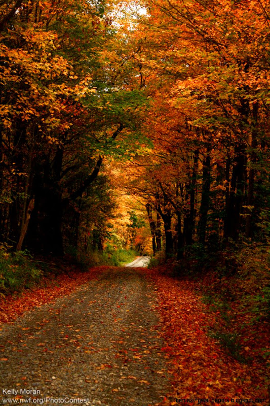 Why Leaves Fall from Trees in Autumn  The National Wildlife
