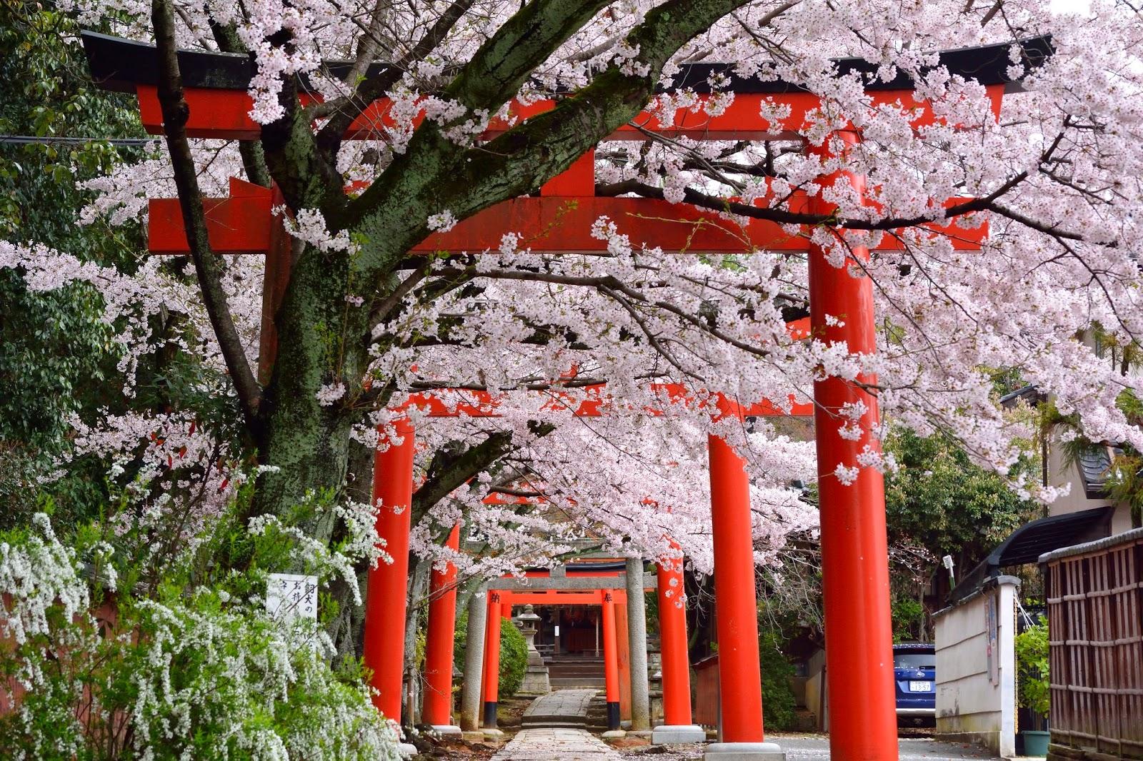 「貴船神社 桜」の画像検索結果