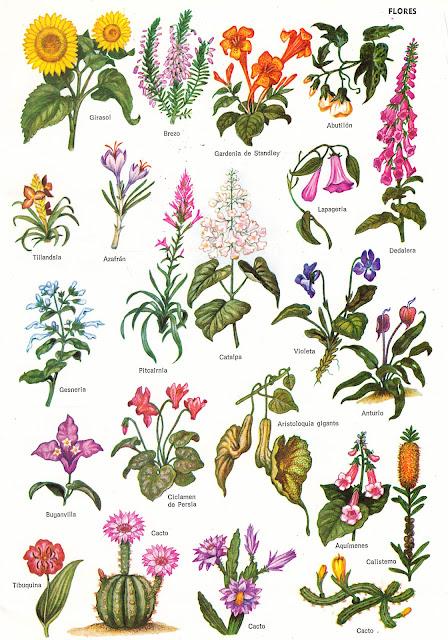 entusiasco l minas de flores 1 On nombres de flores comunes