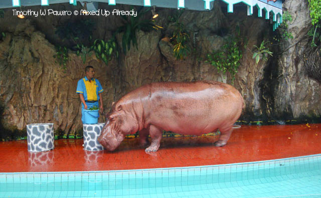 Ancol trip - Various Animals show - The Hippo