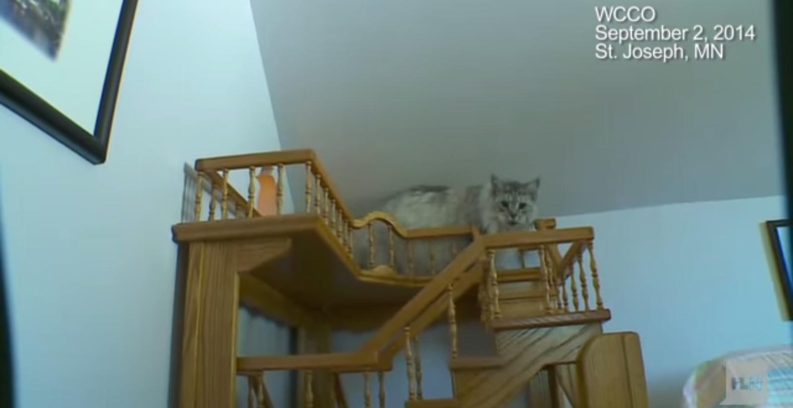 La casa per gatti di Greg Krueger