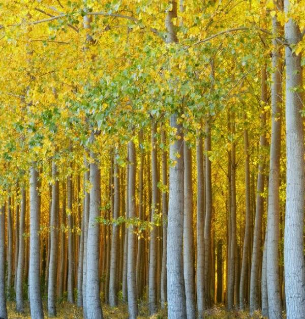 Autumn Trees ~ ND Trivette Photography #autumn #trees