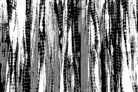 free brushes,adobe brushes,download Photoshop,stamps photoshop,Install brushes,brush photoshop,photoshop,photoshop brushes,Photoshop tutorials,download photoshop,brush for photoshop,photoshop brush,brushes for photoshop,photoshop brushes free,free photoshop brushes,brushes,