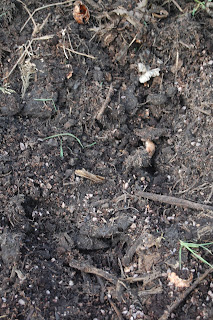What does a garden mean to you part 3 life on pig row for Garden soil meaning