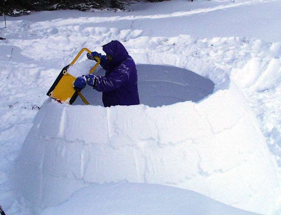 Picture Of Igloo Dog House