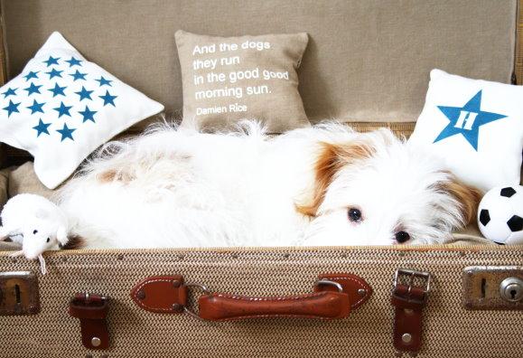 Hundekörbchen selber bauen, mit dem alten Koffer geht es ganz schnell