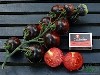 czarne pomidory