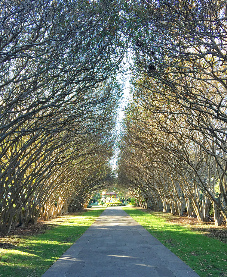 Dallas Arboretum and Botanical Gardens Tree Alley