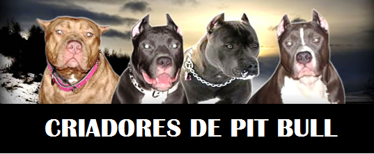 CRIADORES DE  PIT BULL