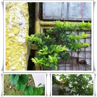 Verde no Meio Ambiente Urbano