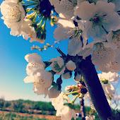 Floració [2]