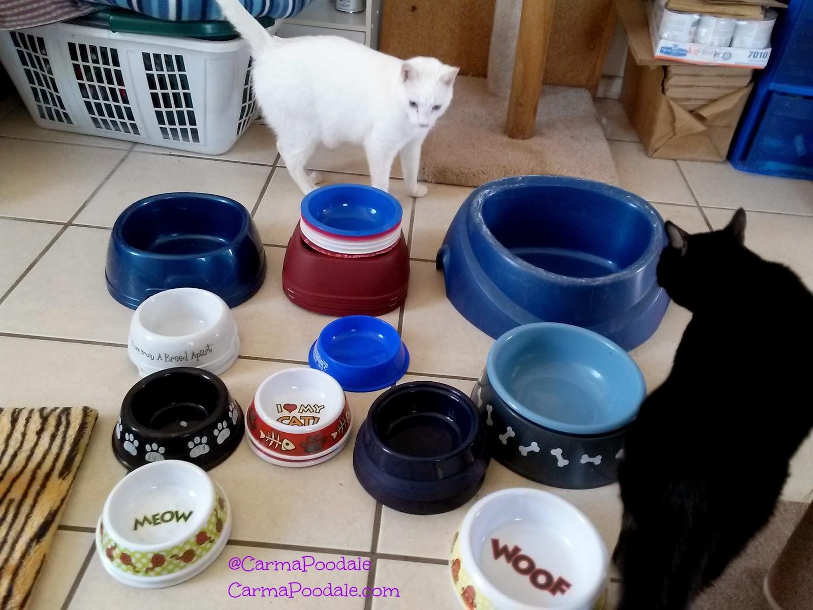 kitties sniffing bowls