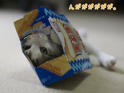 空箱のなかで荒ぶる子猫