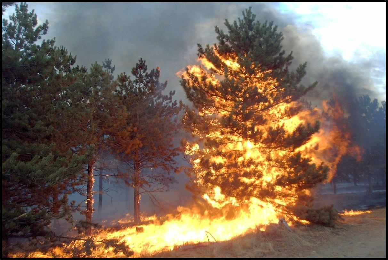 Incendio forestal en bosque de pinos