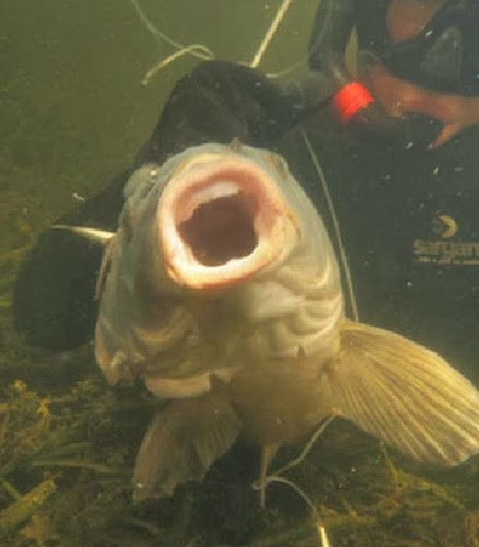 результат подводной охоты