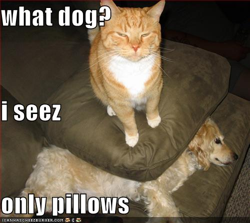 Funny Image Gallery: Very funny dog pictures with captions 'n' funny ...