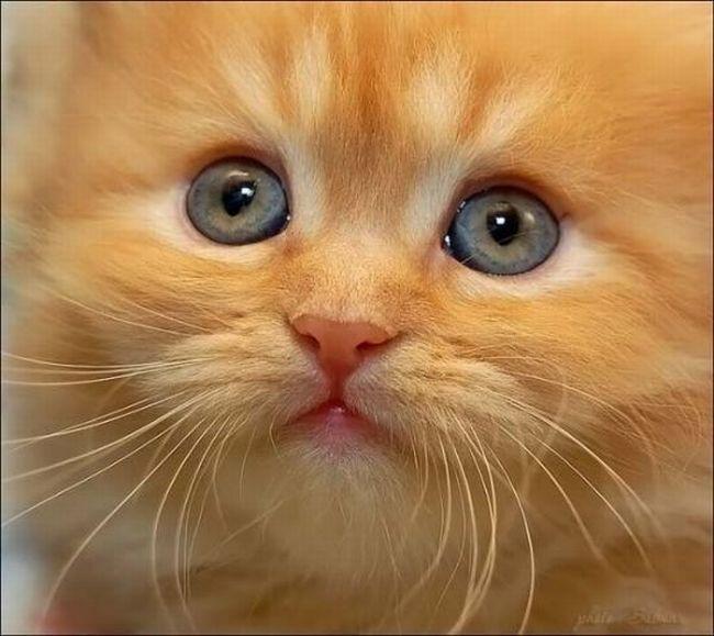 Sevimli kedi resimi sevimli kedi resimleri sevimli kedi resmi sevimli