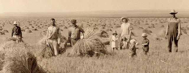 Abundant Montana wheat in 1927