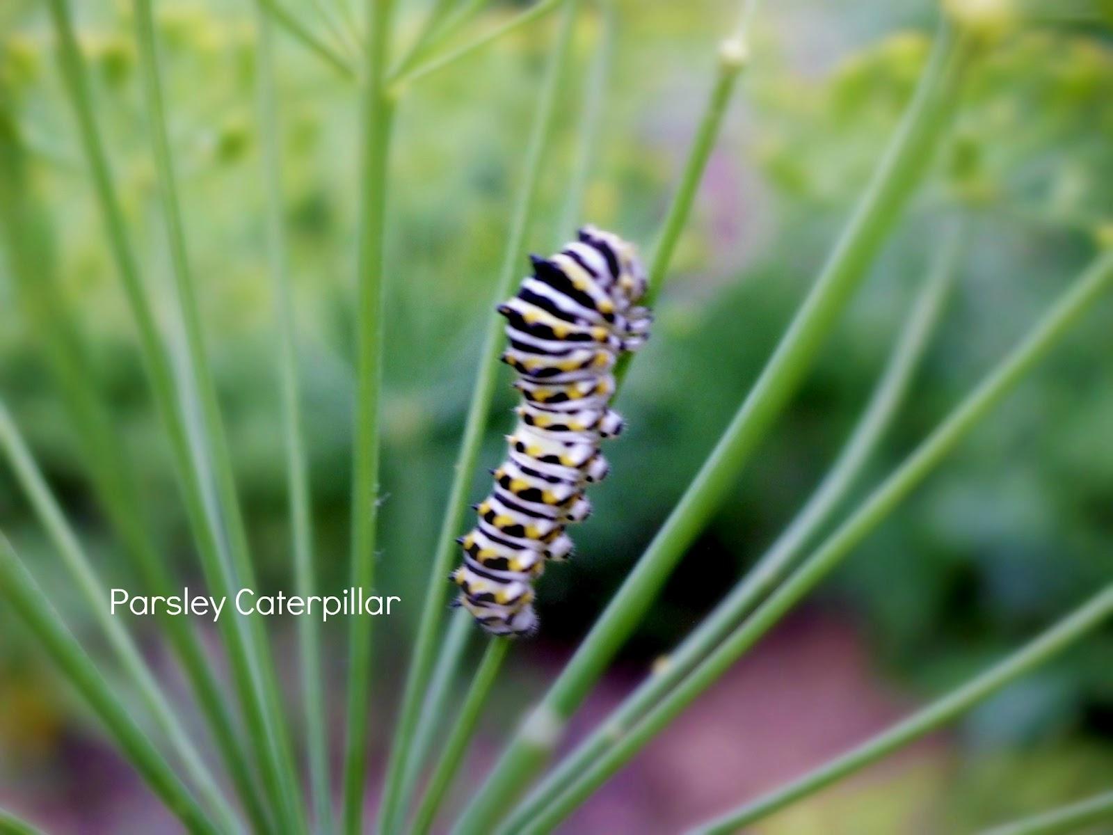 Cómo hacer jardines de mariposa | Entomología