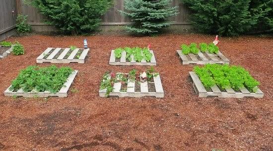 Haz un huerto ecol gico con tus palets for Hacer un huerto en el jardin
