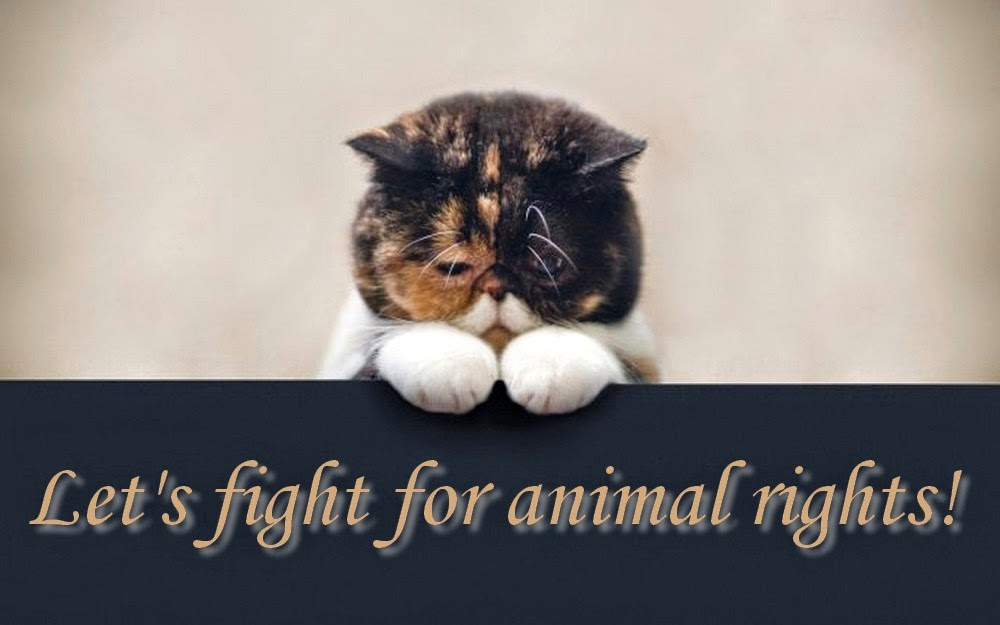 Let's Fight for Animal Rights!