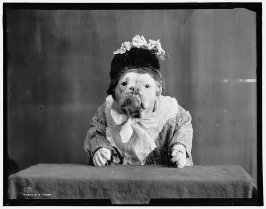 Buldogue vestido mascarado fotografia