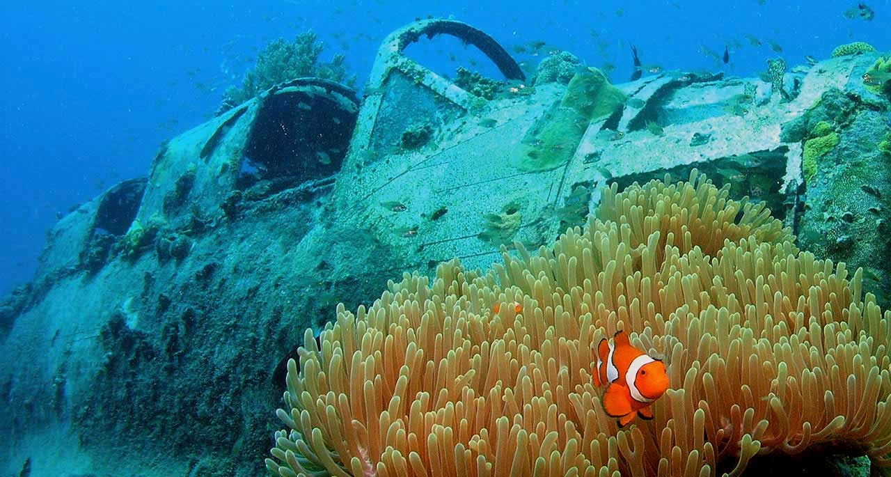 Papua New Guinea has some of the best diving in the world, including plenty of wrecks and clown fish