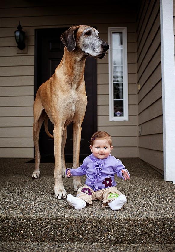 Criancinhas e Cachorrões – Bem Legaus