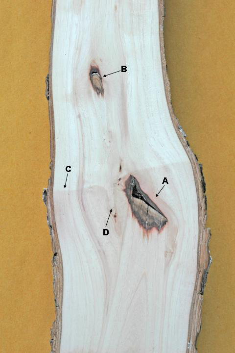 Northern Pecans Anatomy Of A Bark Graft