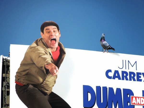 Dumb and Dumber To pigeon embellishment billboard