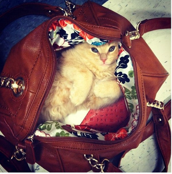 cat hides in a bag, funny cat photos