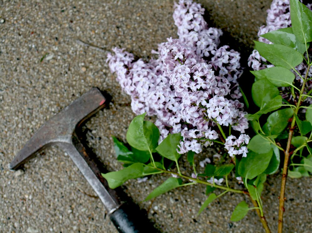 how to make lilacs bloom