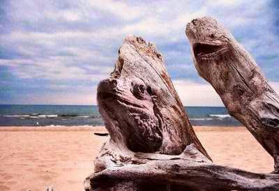 Gambar Aneh Tapi Nyata - kayu mirip kepala bunatang reptil