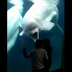 What this whale did when two kids approached the aquarium was PRICELESS!