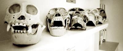 black and white, skulls, mantelpiece, Charles Darwin, Down House, visit, English Heritage