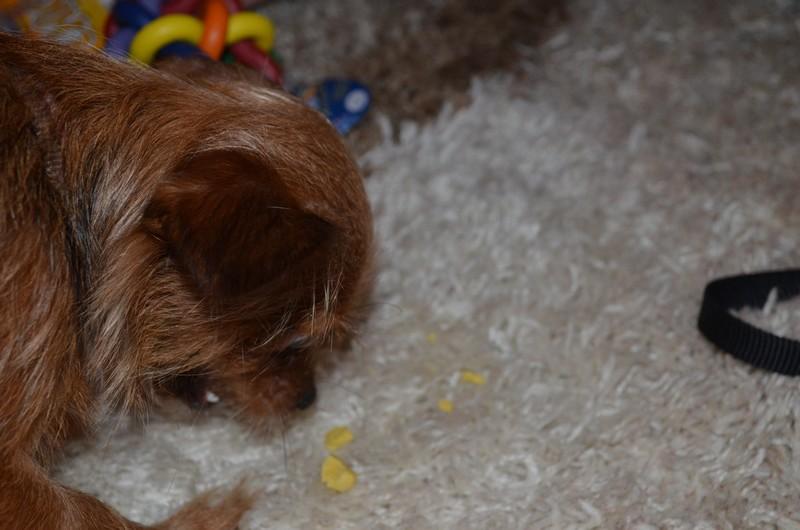 La box cadeaux pour chien la woufbox blog beaut cicirena - Site payable en 3 fois ...