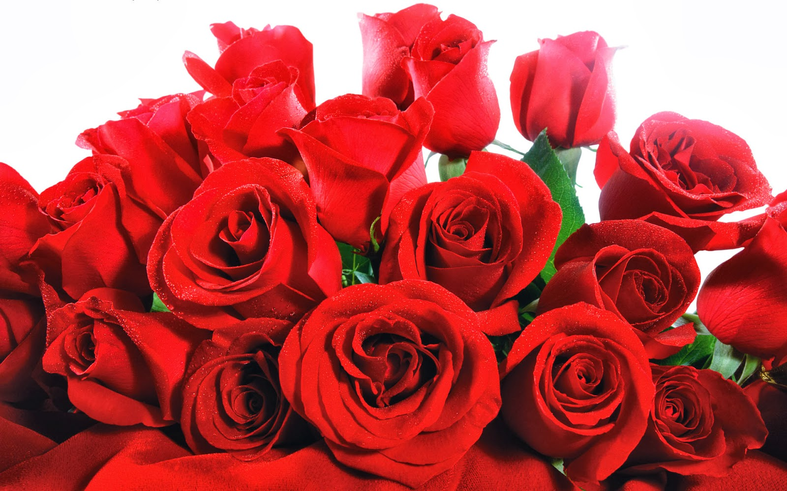 wallpaper bunga bunga mawar cantik