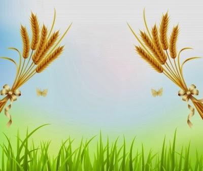 فوائد زيت جنين القمح - المكملات الغذائية المضادة للأكسدة.