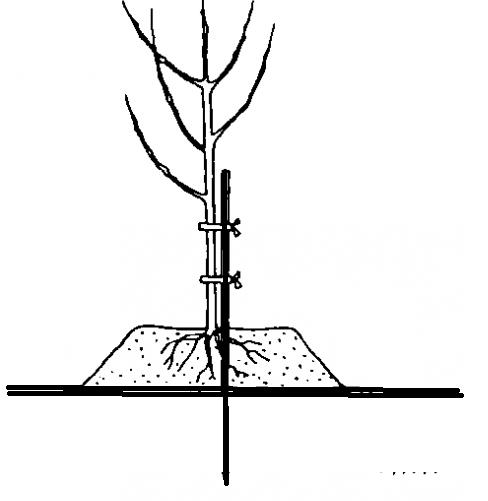 Если близко грунтовые воды как сажать сад 87