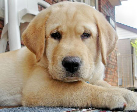 My Top Collection: Pet dog pictures Pet