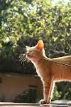 (Mein) Katze
