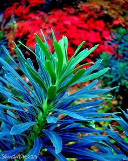 jardín botánico de santa catalina Álava