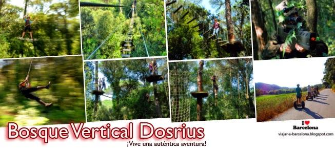 Bosc vertical Dosrius